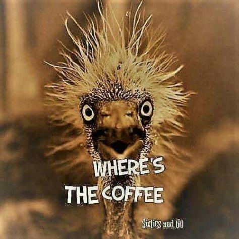 8d77eb6aa5e79d701b2e9d427e80089d--funny-coffee-humor-coffee-memes